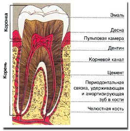 Терапия канала зуба
